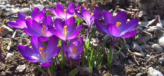 Die Blumen des Frühlings sind die Träume des Winters (Khalil Gibran)