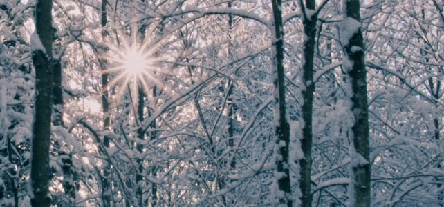 Im tiefsten Winter den Sommer spüren