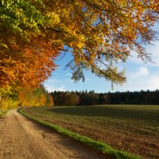 Der Herbst zeigt uns, wie wunderschön loslassen sein kann
