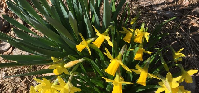 Frühlingserwach(s)en